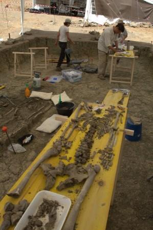 Clasificación de restos óseos a pie de campo en una de las fosas comunes del Marrufo (Foto: Juande).