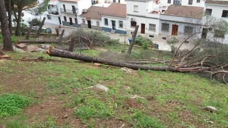 Árboles talados en los Pinitos.