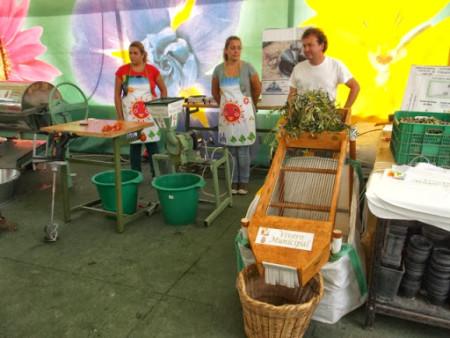 Actividad del Vivero Municipal con el colegio Víctor de la Serna