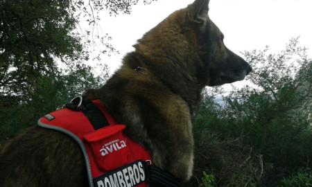 Perro rastreador de los bomberos.