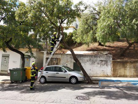 Los bomberos retiran un árbol que se había inclinado sobre un vehículo