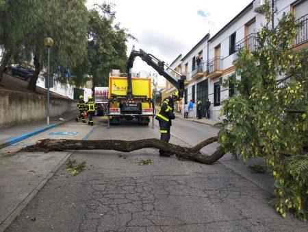 Retirada del árbol por los bomberos.