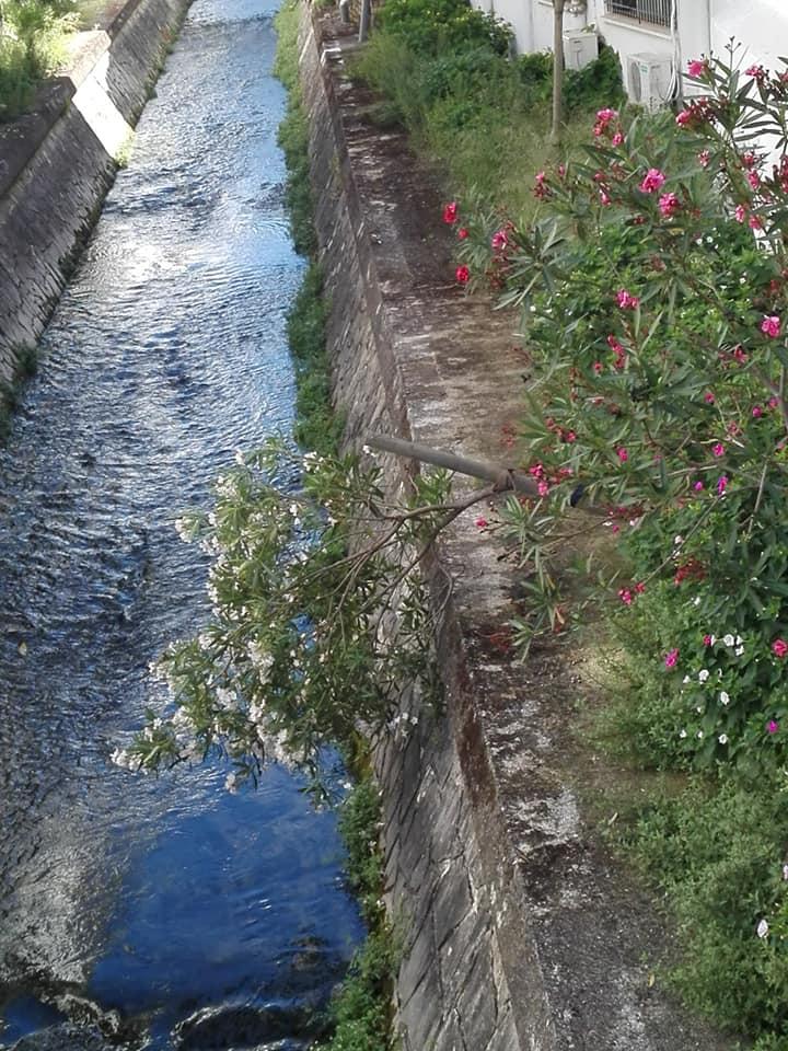 Un arbusto que sucumbe: artículo de opinión de Pedro Bohóquez Gutiérrez